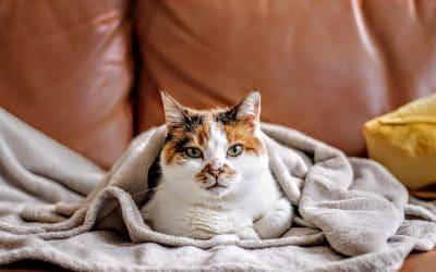 10x warme fleece dekens